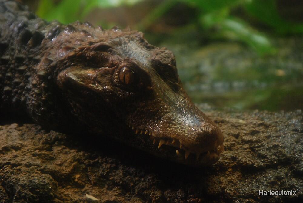 Iguana gunna get you by Harlequitmix