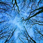 Root or Branch v 03 : Photography by Alys Griffiths by sigriff