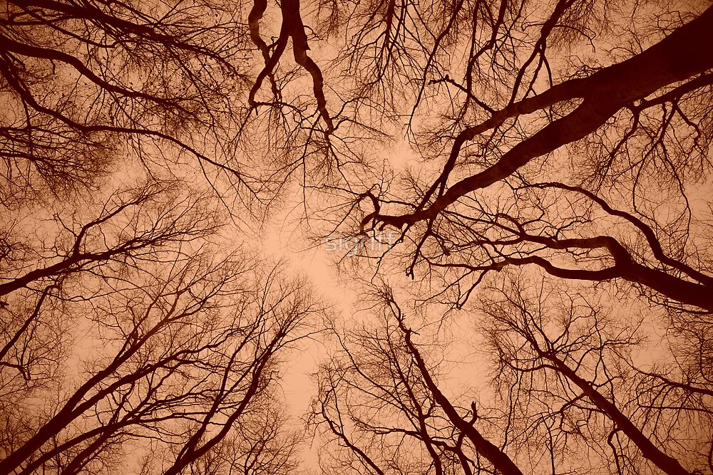 Root or Branch v 04 : Photography by Alys Griffiths. by sigriff