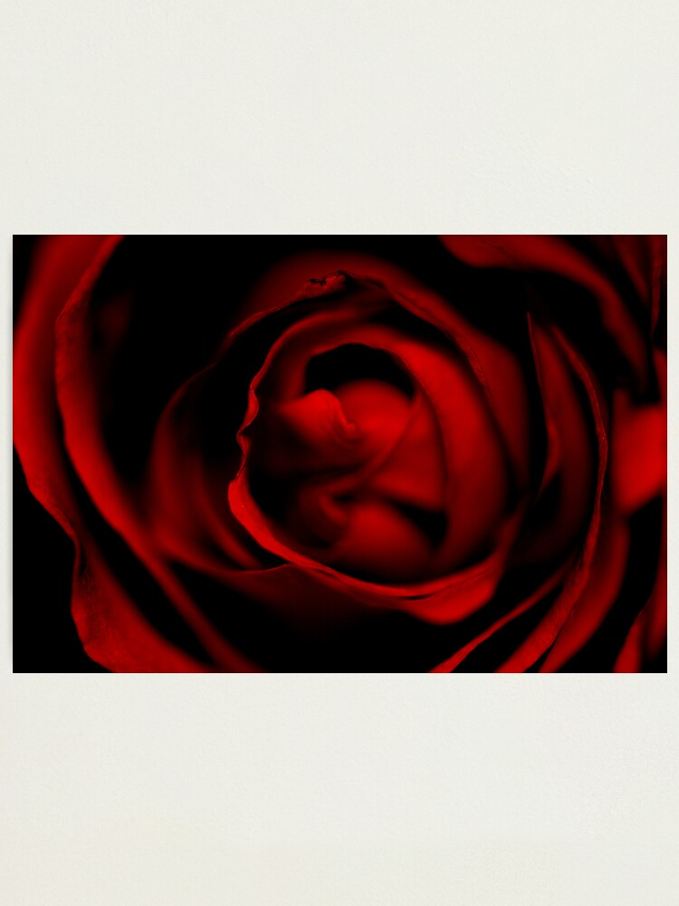 Alternate view of Entering the Rose Photographic Print