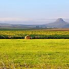 Twixt Vrede & Memel by MikeO