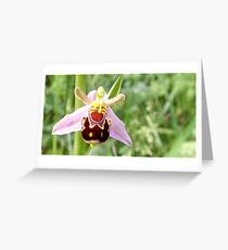 Wild Bee Orchid Greeting Card