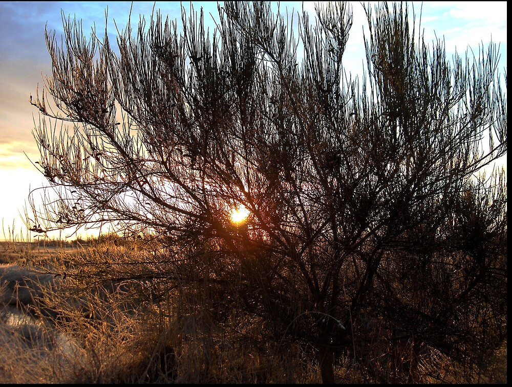 early morning sun by hanne