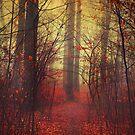 the way in - mysterious misty woodland by Dirk Wuestenhagen