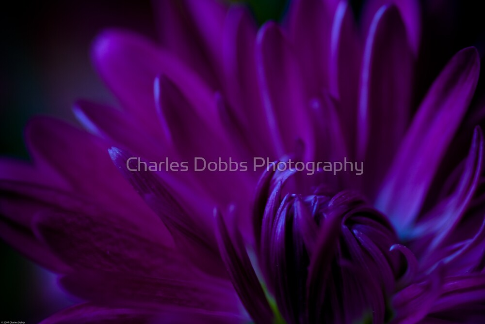 Passion by Charles Dobbs Photography