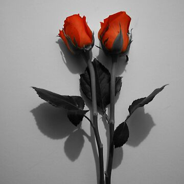 Highlighted rose by Designcat