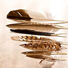 Horizontal feathers  by Margaret Stanton