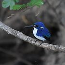Little Kingfisher by RochelleJean
