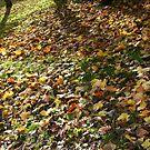 shaddowed leafs by superman