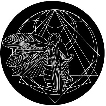 Cockroach Sigil by occulttrash