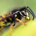 Wasp 2 by LisaRoberts