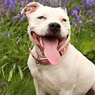 Laughter is the best doggy medicine too! by LisaRoberts