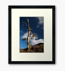 lone tree by loch muick Framed Print