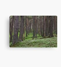 loch muick forest Canvas Print