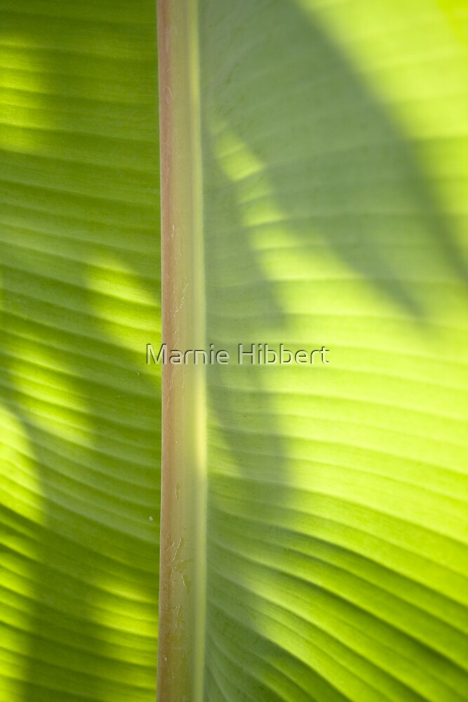Palm life One by Marnie Hibbert