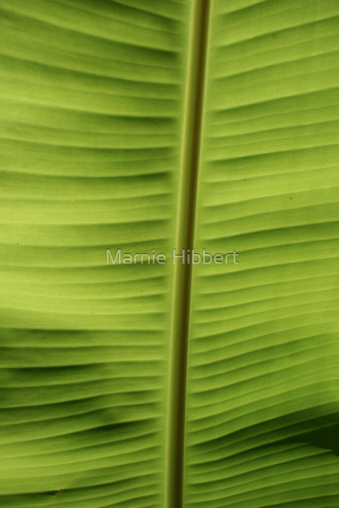Palm life Four by Marnie Hibbert