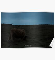 Highland-Cattle likes the storm Poster