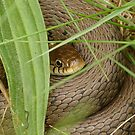 Snake in the grass by jesika