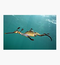 Another Day Another Dragon Photographic Print