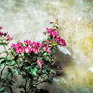 Flowers against wall by Silvia Ganora