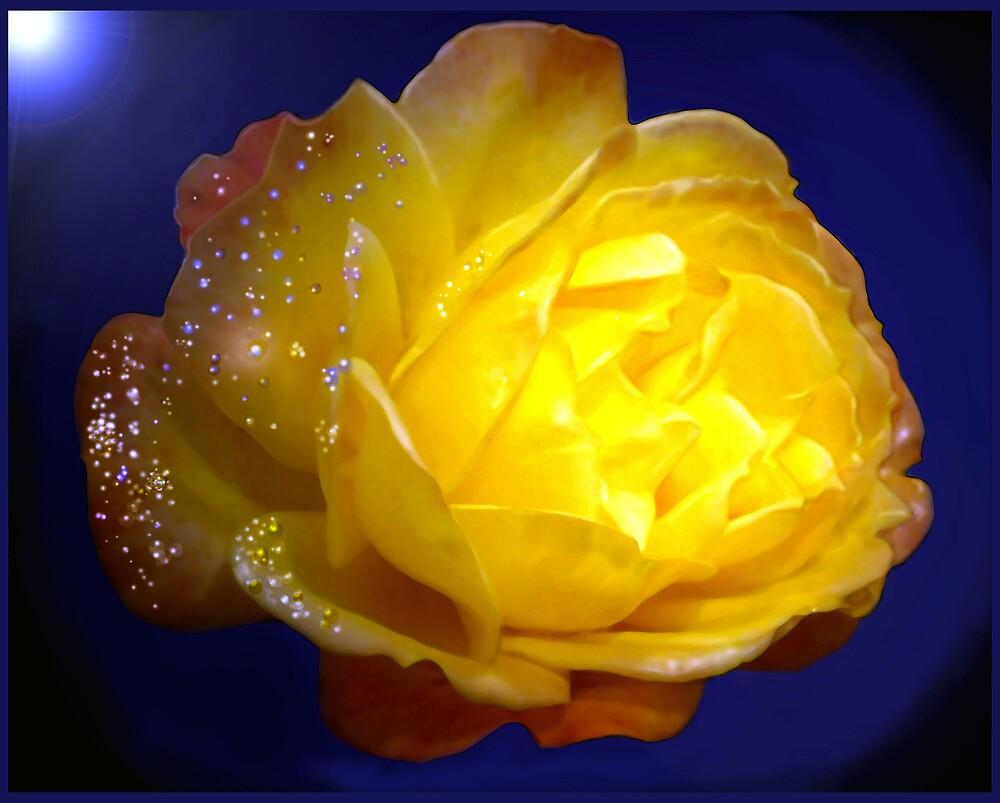 Christmas Rose. by EmilyWinter