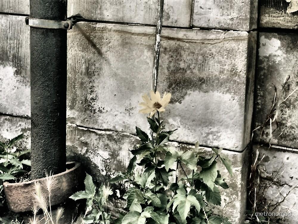 Wallflower by metronomad