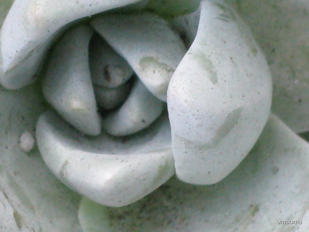 Center by umauma