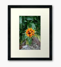 Floral Star Framed Print