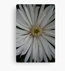 Unnamed08 Canvas Print