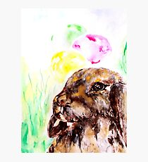 Brown bunny Photographic Print