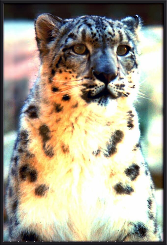 Snow Leopard. by EmilyWinter