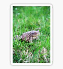 Bufo bufo frog  Sticker