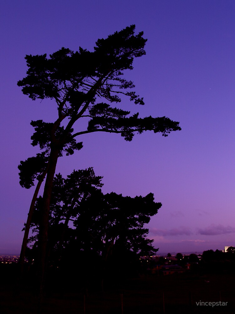 Bent Trees at Dusk by Vince Lovrich