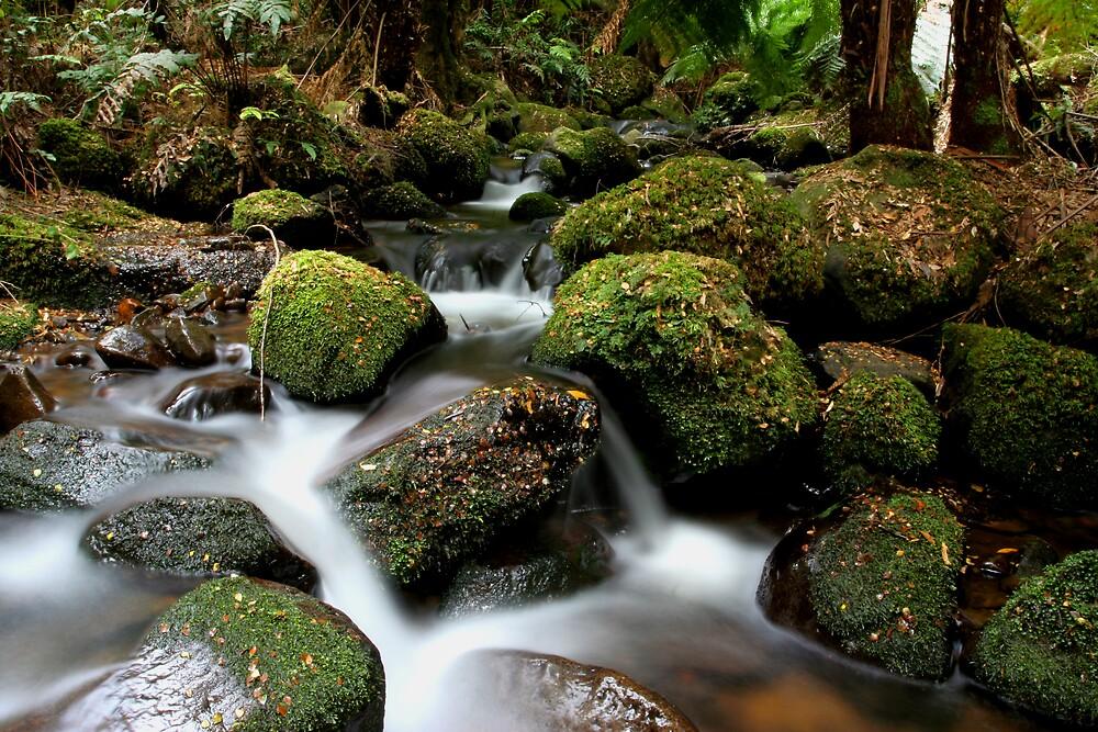 Mossy Rocks by Lindsay Knowles