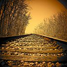 Railroad tracks in the Michigan woods..slipping away by jammingene
