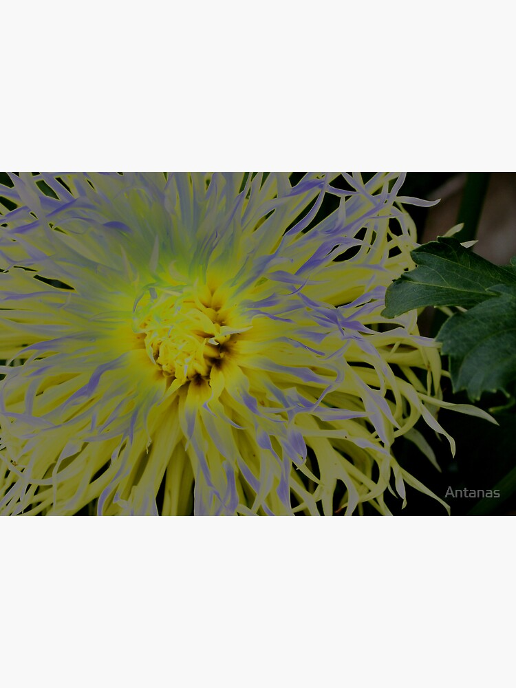 Flowers  2  by Antanas