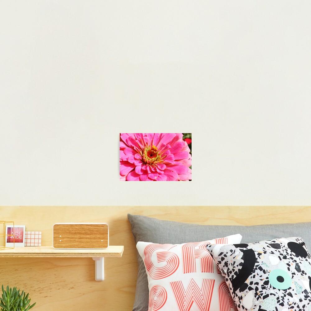 Flowers 4 Photographic Print