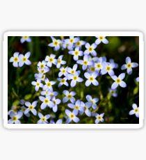 Spring Garden Bluet Flowers Sticker