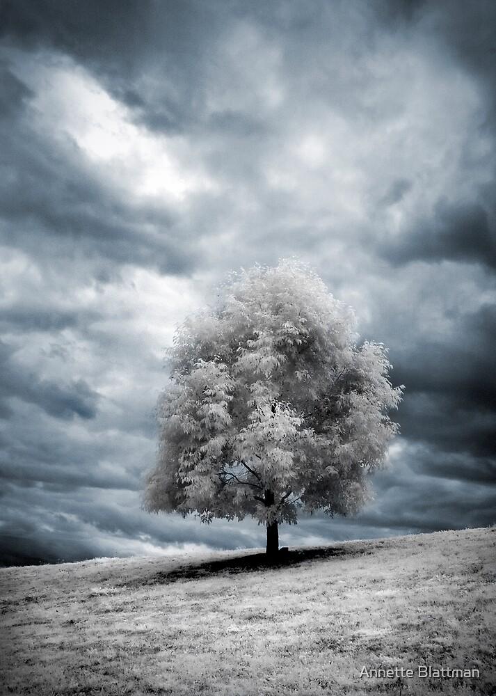 Glowing Tree by Annette Blattman