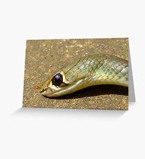 yellow Whip Snake-Macro- Greeting Card