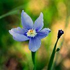 Spring Song by Bill Morgenstern