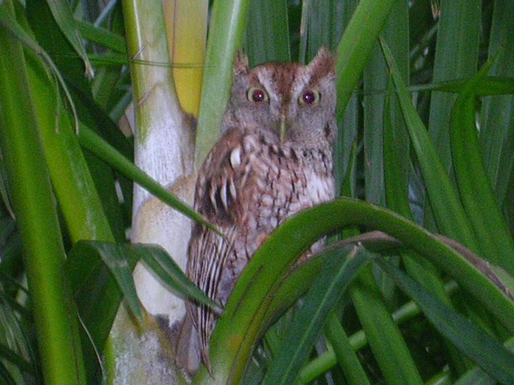 Owl by kyleshope