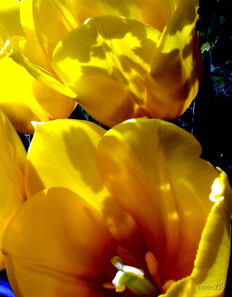yellow flowers in sun 3 by mrmc714