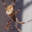 golden orb spider by BigAndRed