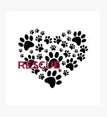 Animal Rescue Photographic Print