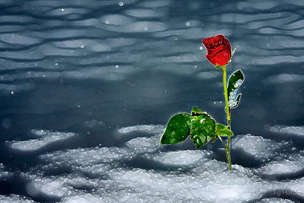A Winter Rose by Ty Hurd