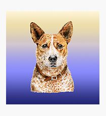 Love Me Love My Australian Cattle Dog - Red Beauty Photographic Print