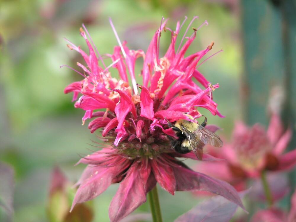 Blossom & Bee by Stuart Gray
