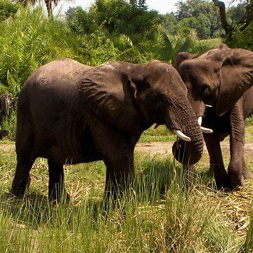 Elephants on Parade by Corky