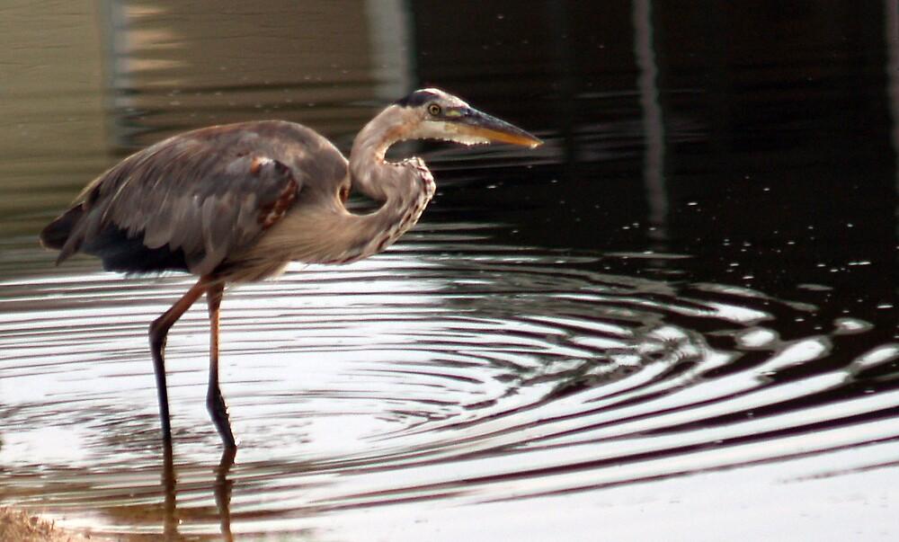 Heron ripple by Ricky Howard